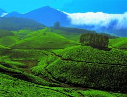 MUNNAR BUDGET HONEYMOON TOUR 3 DAYS/ 2 NIGHTS