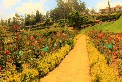 MYSORE / MYSURU & OOTY BUDGET TOUR PACKAGE 4 DAYS / 3 NIGHTS
