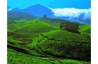 MUNNAR TOUR PACKAGE 3 DAYS/2 NIGHTS