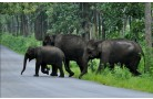 WAYANAD WILDLIFE SANCTUARY (MUTHANGA WILDLIFE SANCTUARY)